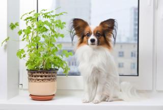 Защита животных при монтаже пластиковых окон